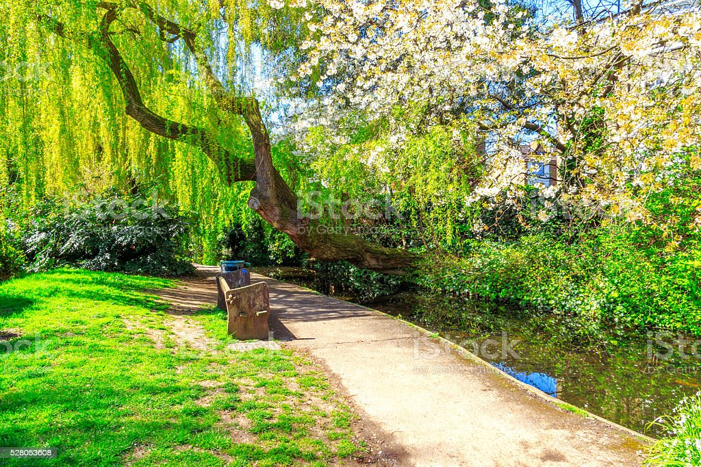 Willow Tree and Cherry Blossom at New River Walk, London stock photo