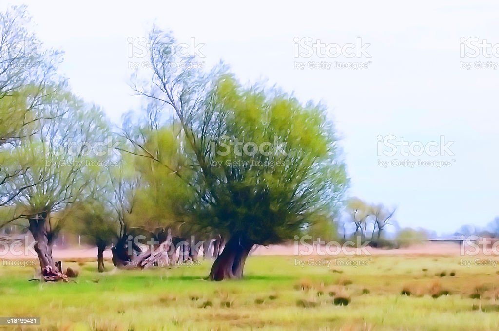 willow tree at meadow stock photo