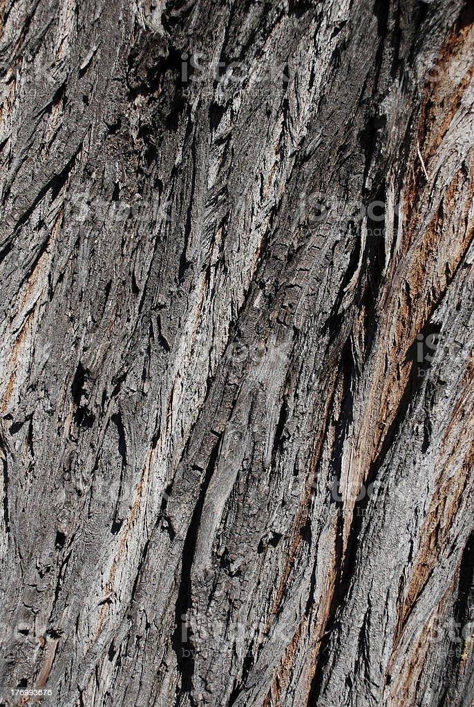 Willow Tree Bark Background royalty-free stock photo