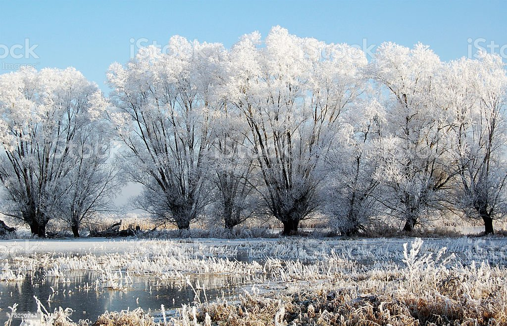 Willow tree in winter landscape at Havel River (Germany) royalty-free stock photo