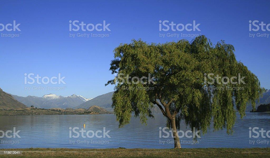 Willow tree on Lake Wanaka stock photo