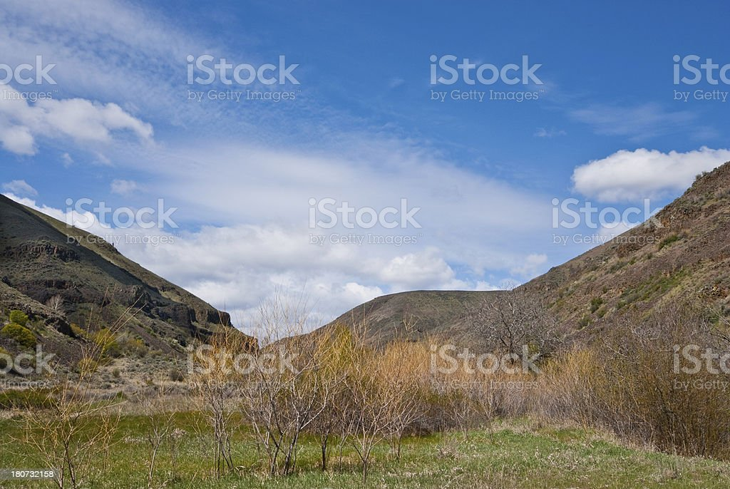 Willow Trees in Umtanum Creek Canyon stock photo
