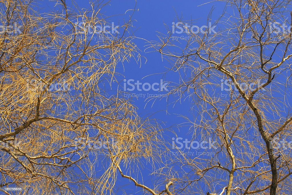 Willow trees on blue sky royalty-free stock photo