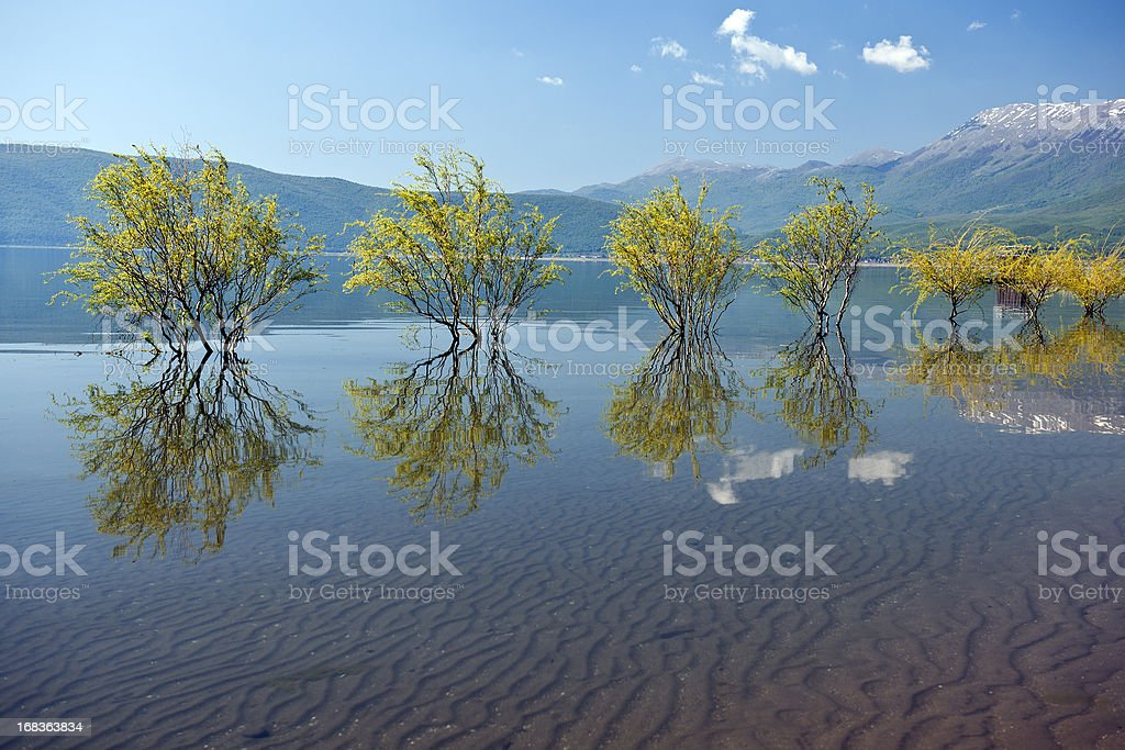 Willows Floating in Blue Flood stock photo