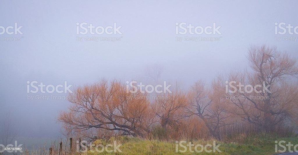 Willows w mgle zbiór zdjęć royalty-free
