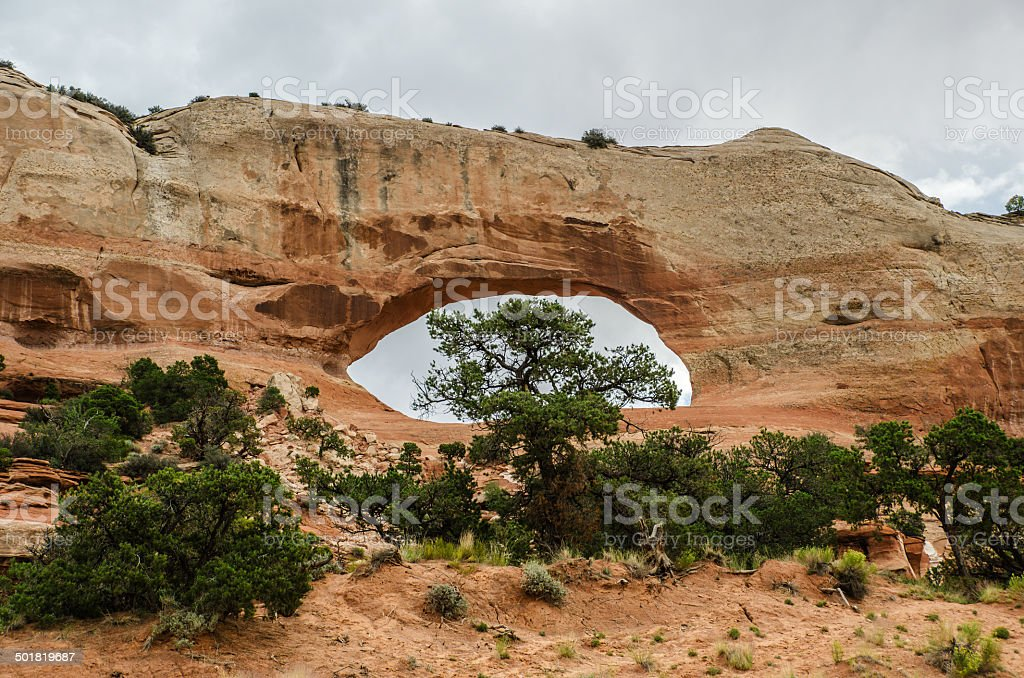 Wilson Arch with Tree stock photo