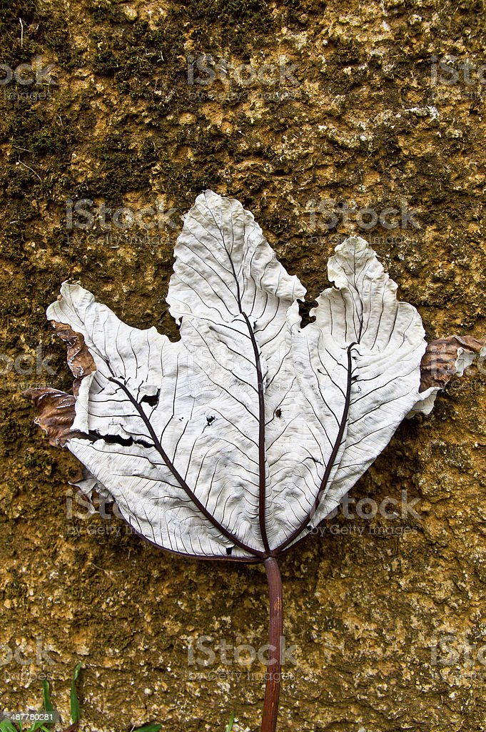 wilted leaf on dry ground stock photo