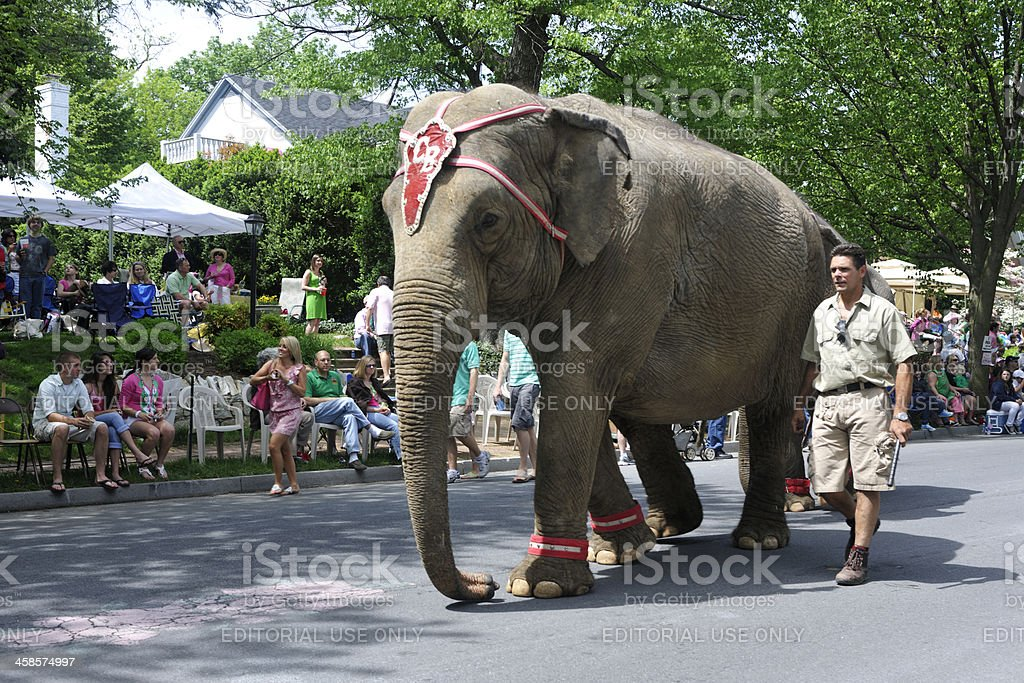 Winchester, Virginia Apple Blossom Festival Elephant stock photo