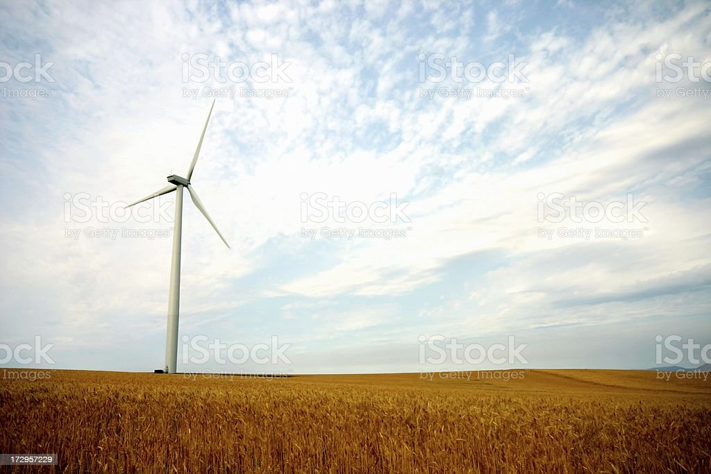 Wind and Wheat royalty-free stock photo