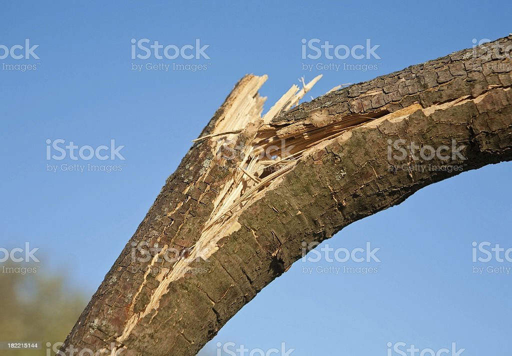 wind damaged branch royalty-free stock photo
