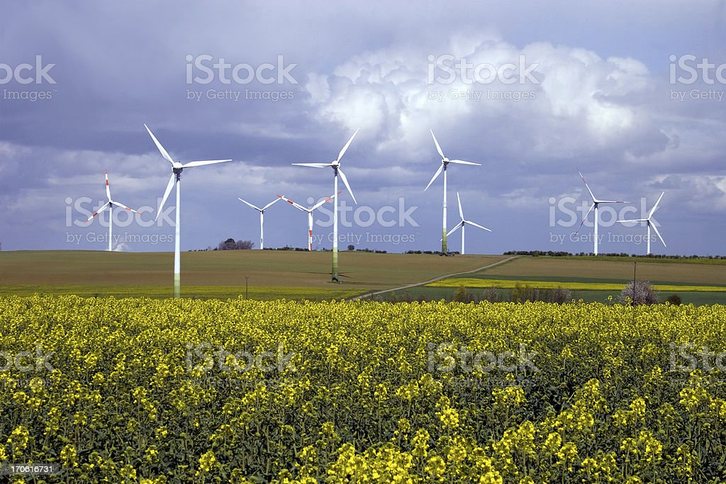 Wind energy and canola fields royalty-free stock photo