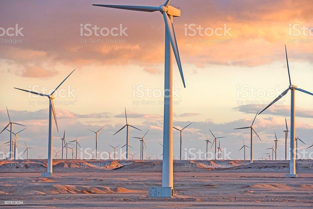 Wind farm at sunset moment, Egypt stock photo