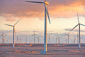 Wind farm at sunset moment, Egypt
