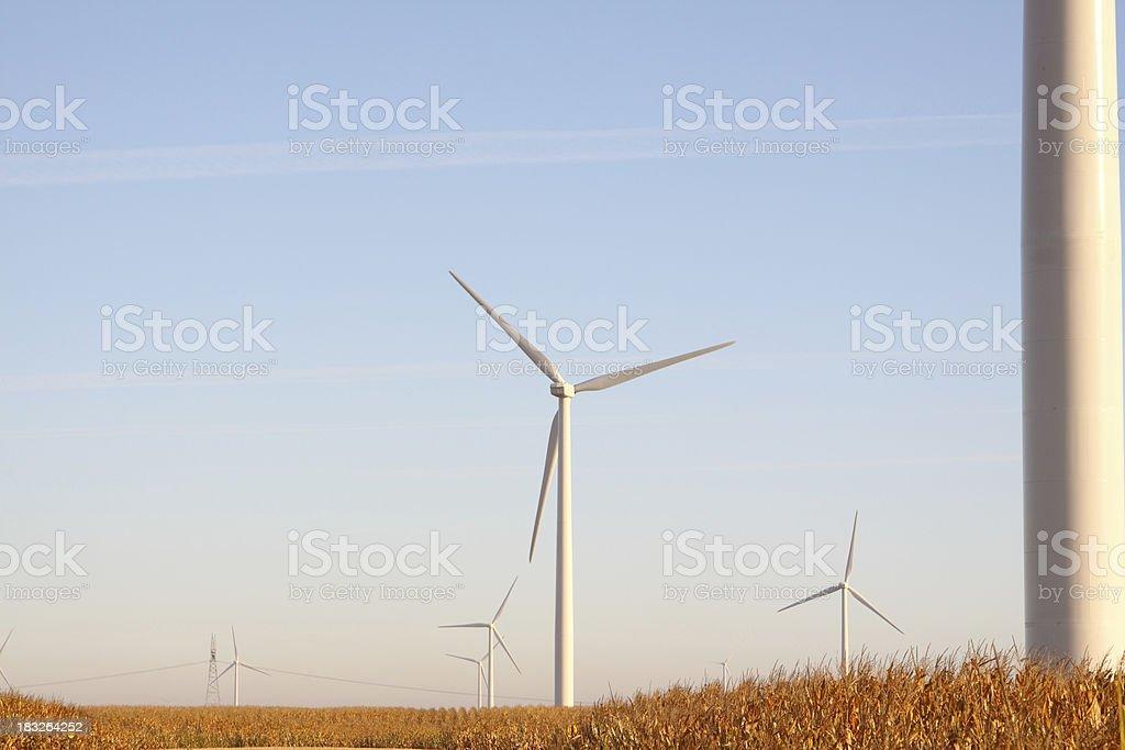 Wind Farm & Corn Crop royalty-free stock photo