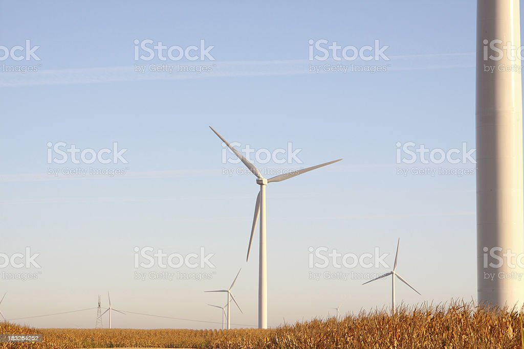 Wind Farm & Corn Crop stock photo