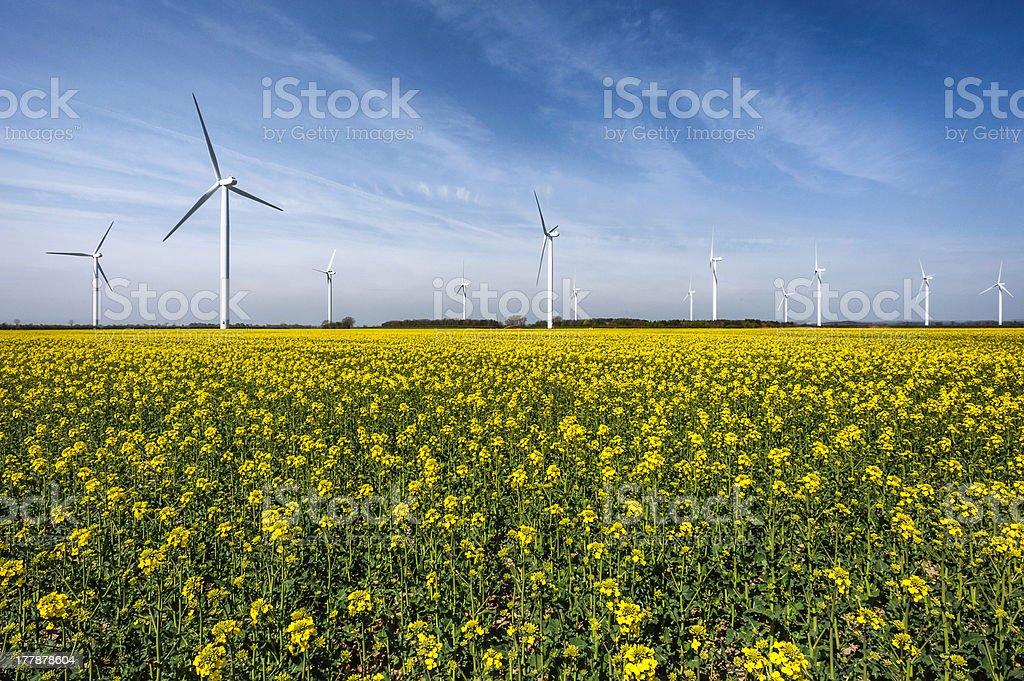 Wind farm, field of oil seed rape, Beverley, Yorkshire, UK. stock photo