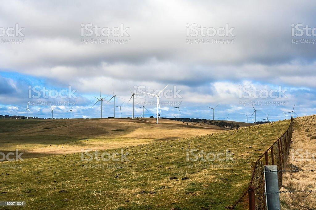 Wind farm on cattle farm stock photo