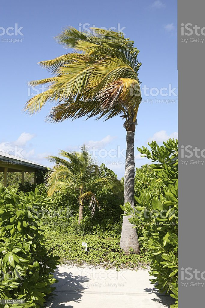 Wind gusting through the Caribbean Island royalty-free stock photo