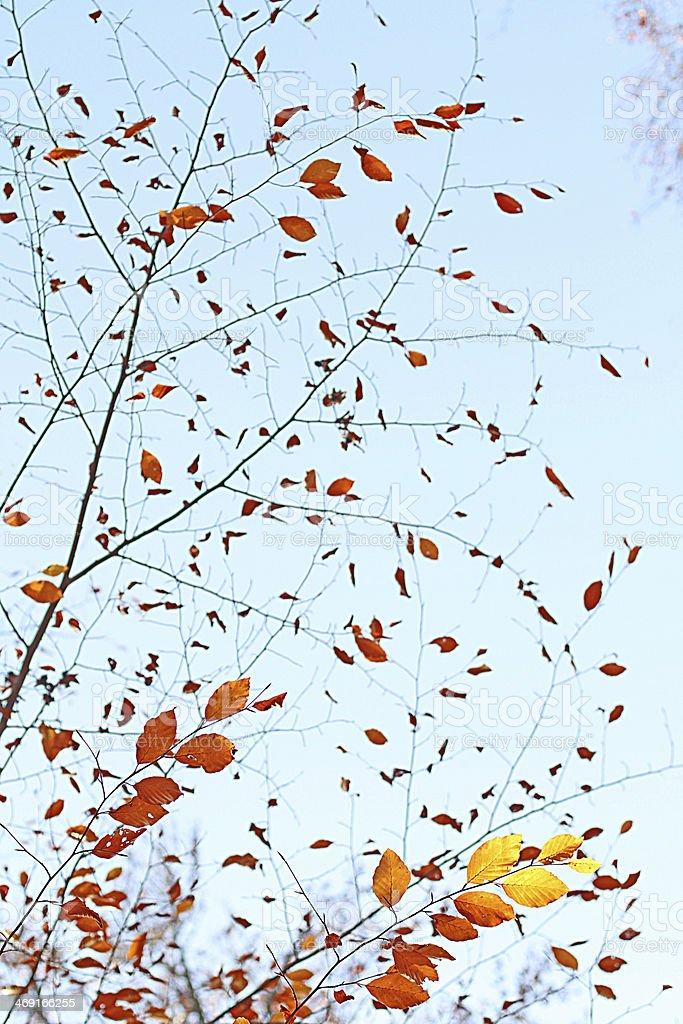 Wind in den Zweigen stock photo