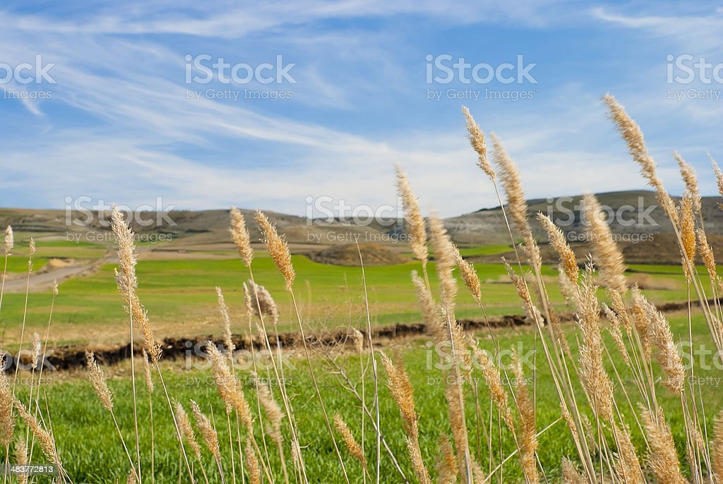 Wind in the fields royalty-free stock photo