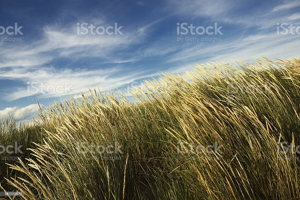 Wind in the grass royalty-free stock photo