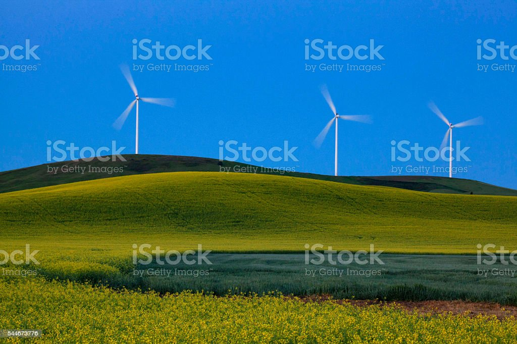 Wind Mills and Wheat Fields stock photo