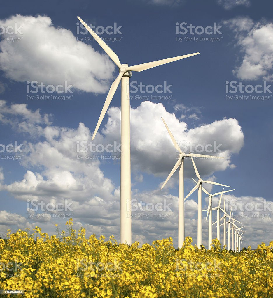 Wind park and rape field royalty-free stock photo