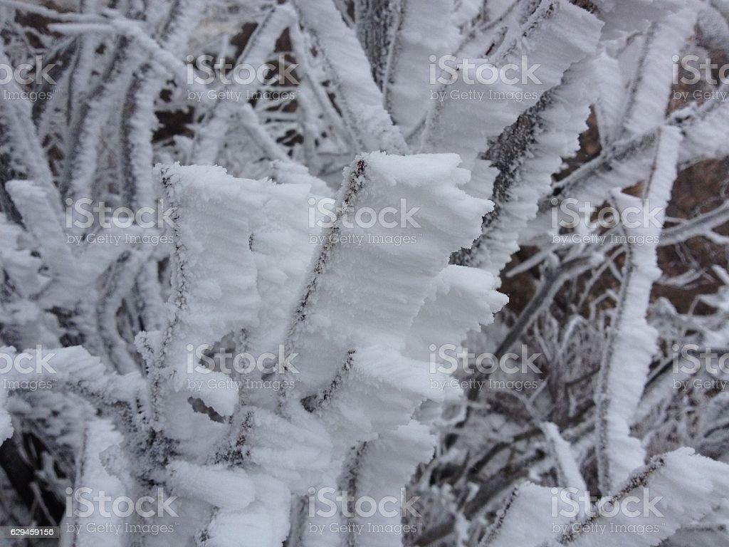 wind snow stock photo