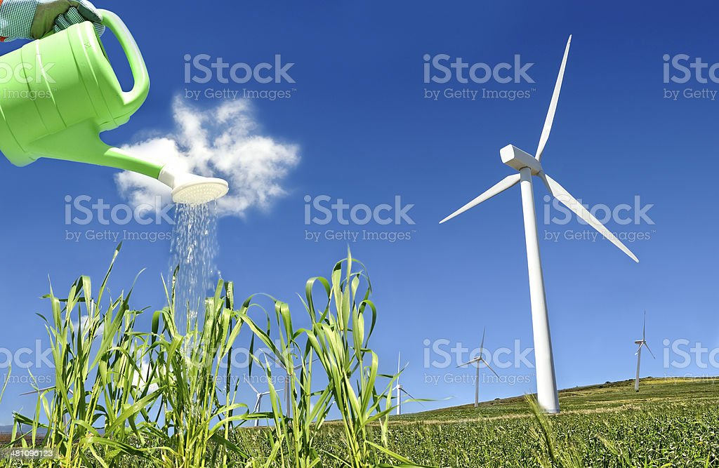 Wind turbine and wheat being watered stock photo