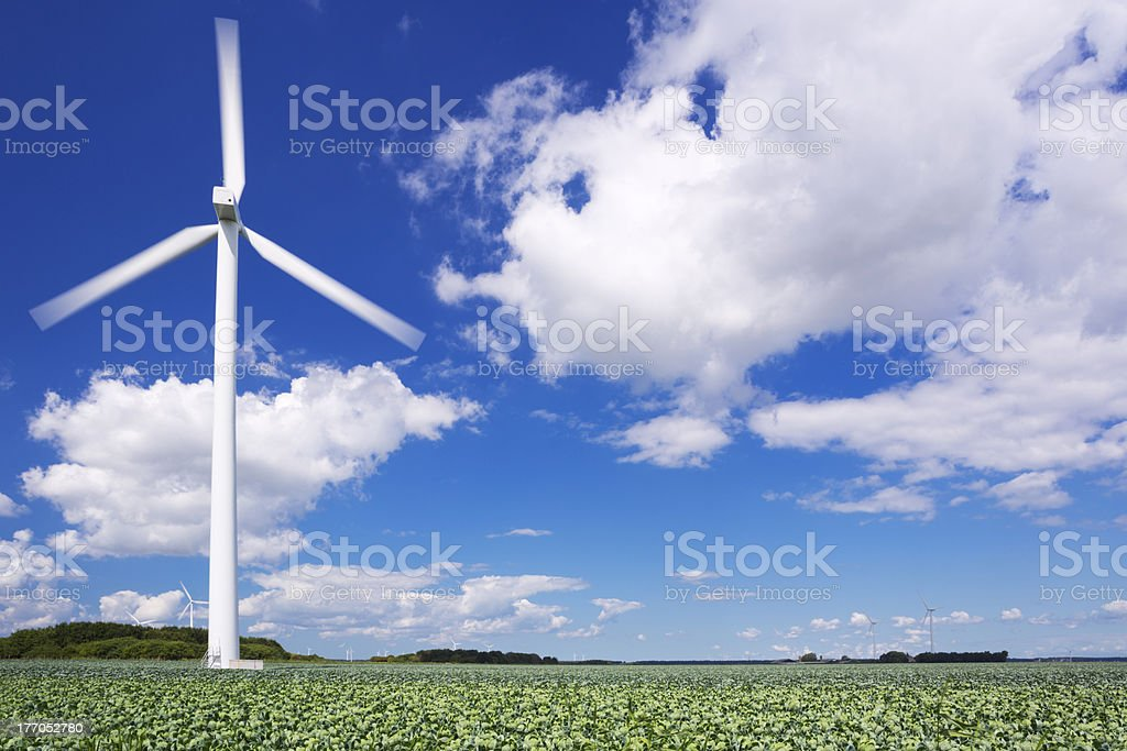 Wind turbine in a field with Brussels sprouts royalty-free stock photo