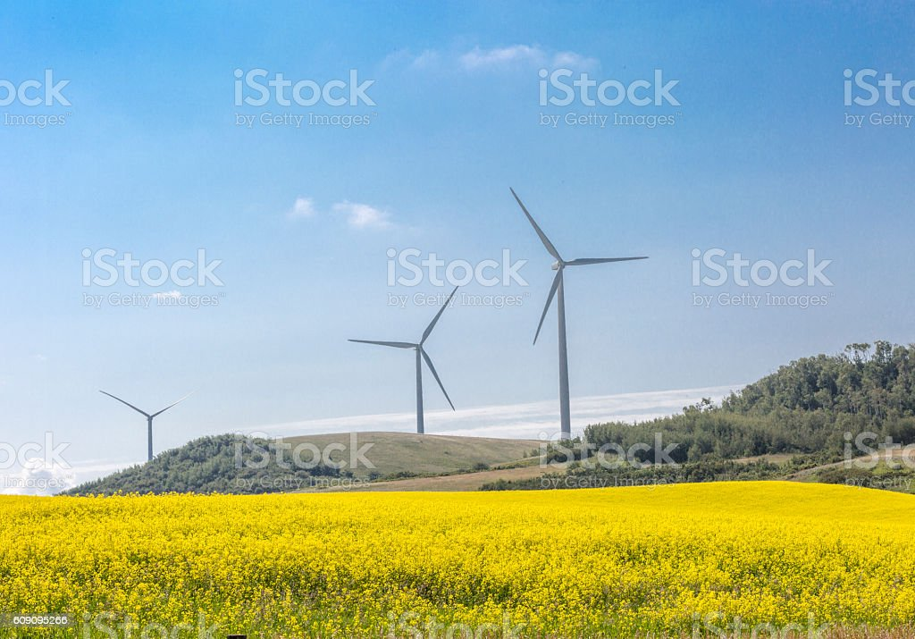 Wind turbine in field of canola stock photo