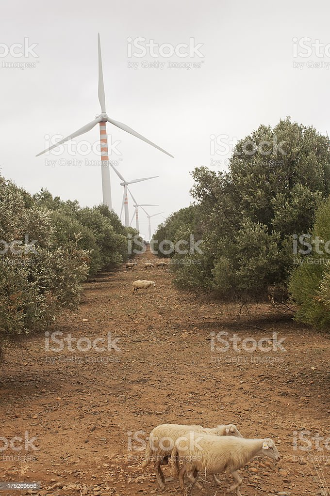 wind turbine in Sardinia olive grove royalty-free stock photo