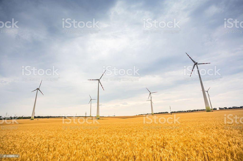 Wind Turbine on wheat field stock photo