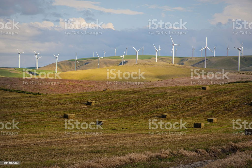 Wind turbines among wheat fields royalty-free stock photo