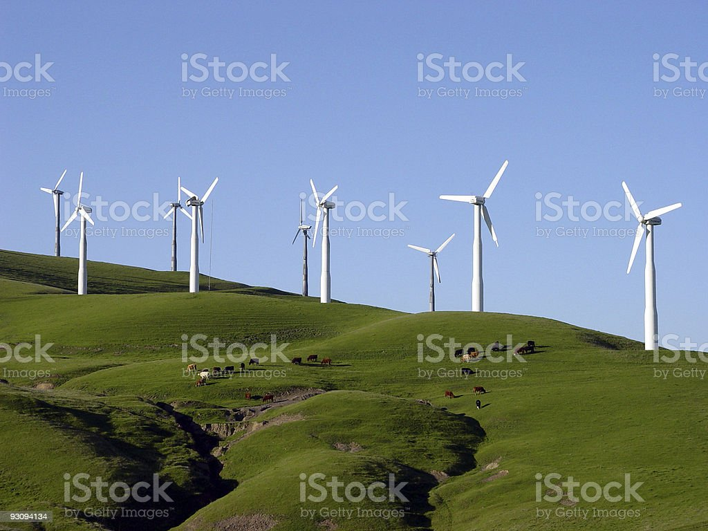 Wind Turbines and Cattle Pasture in California stock photo