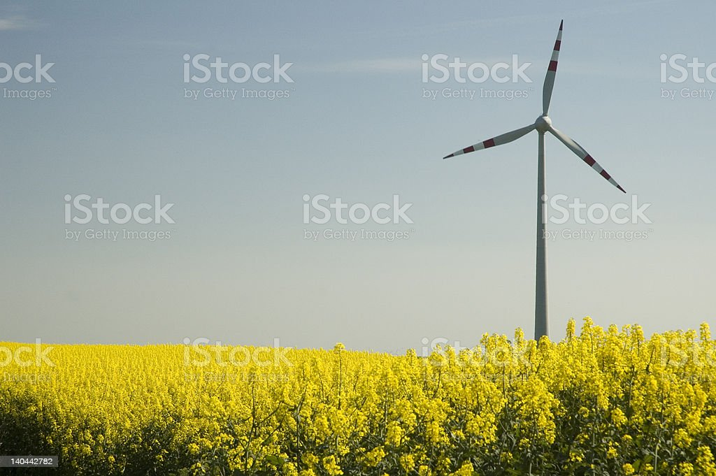 Wind turbines and rapeseed field royalty-free stock photo