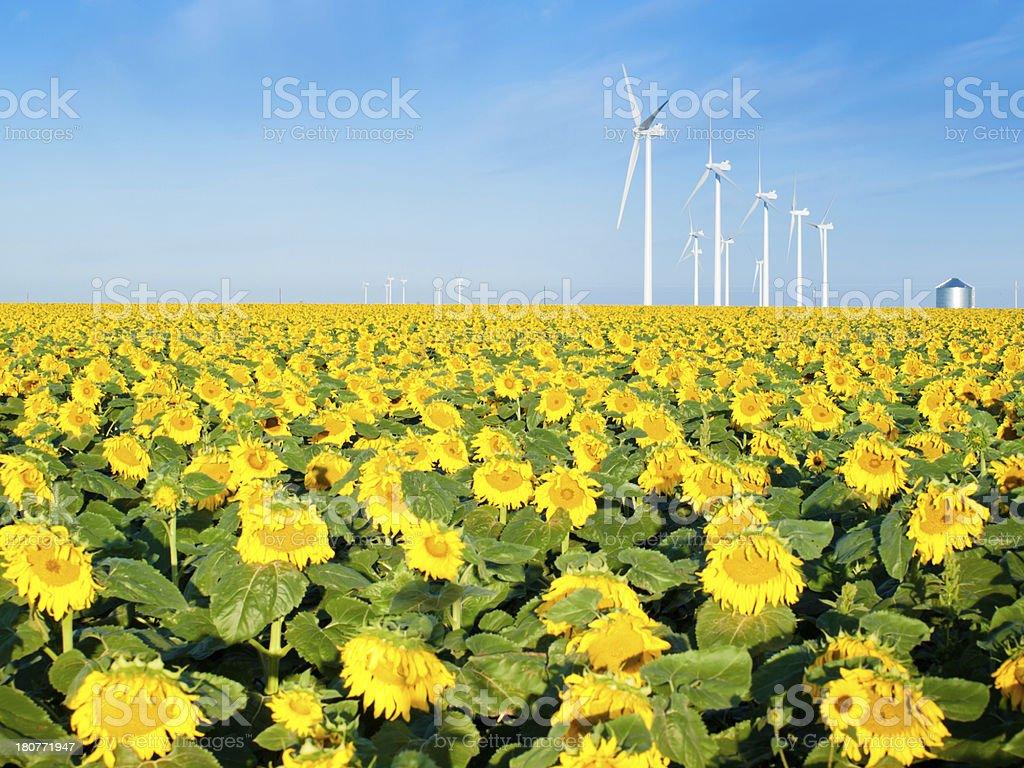 Wind turbines and sunflowers stock photo