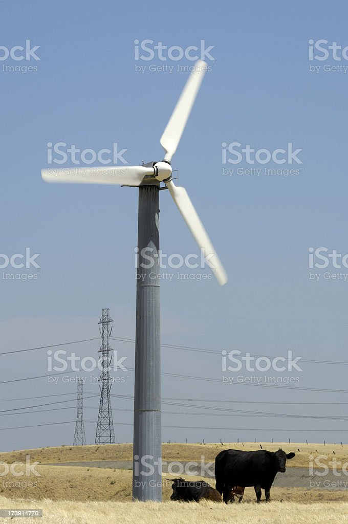 Wind Turbines, Cows and Electrical Pylons stock photo