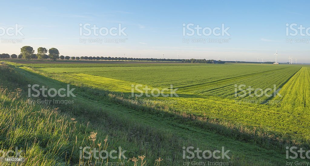 Wind turbines in a field at fall stock photo