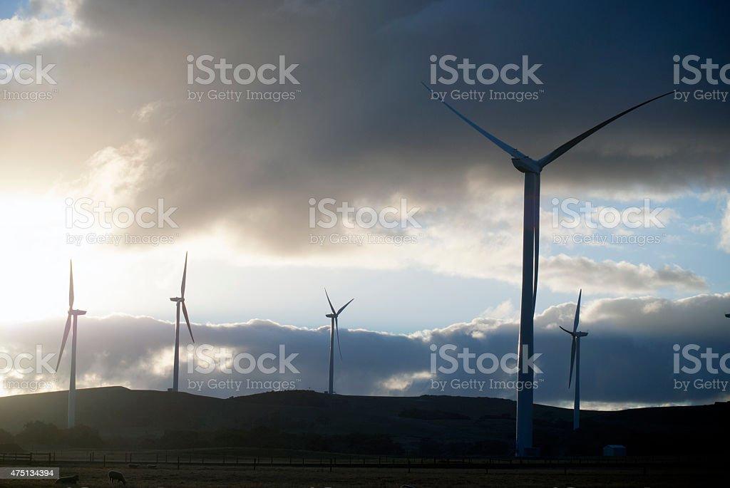 wind turbines in a field stock photo