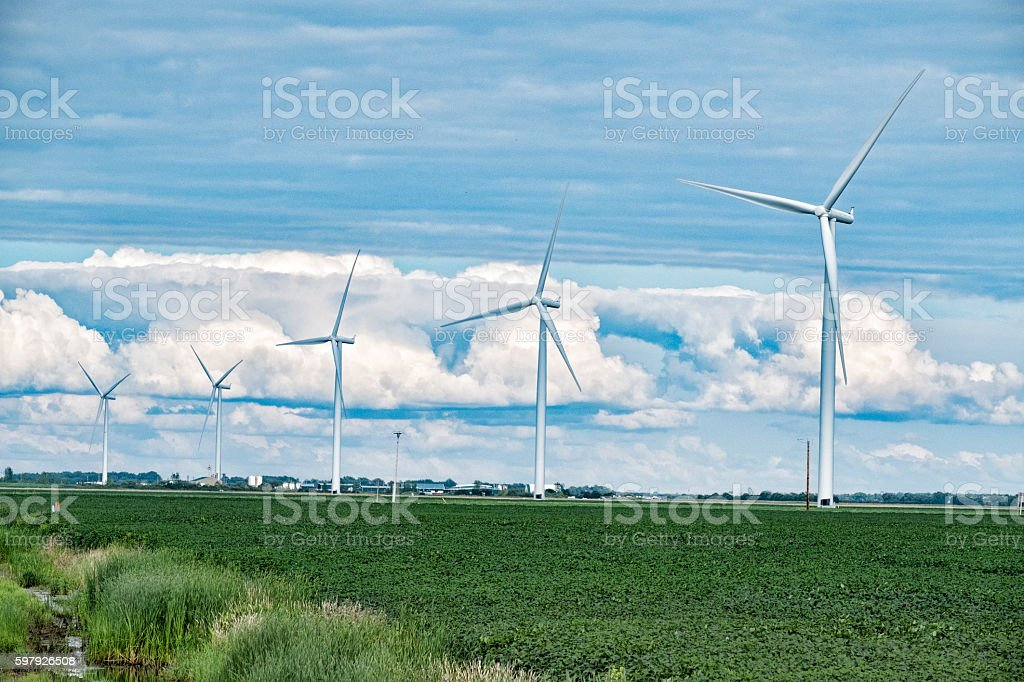 Wind Turbines in a Soybean Field in Southern Manitoba stock photo