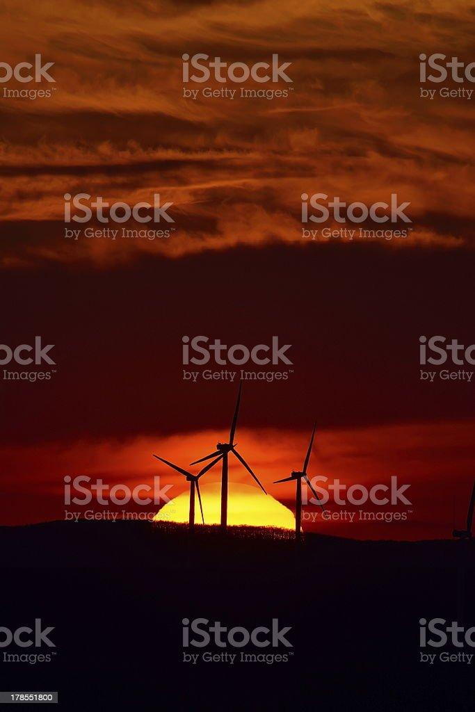 wind turbines on field at sunset stock photo