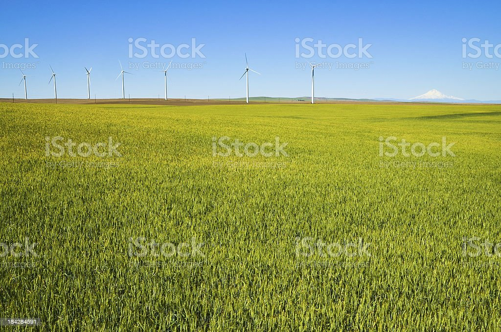 Wind Turbines with field and mountain royalty-free stock photo