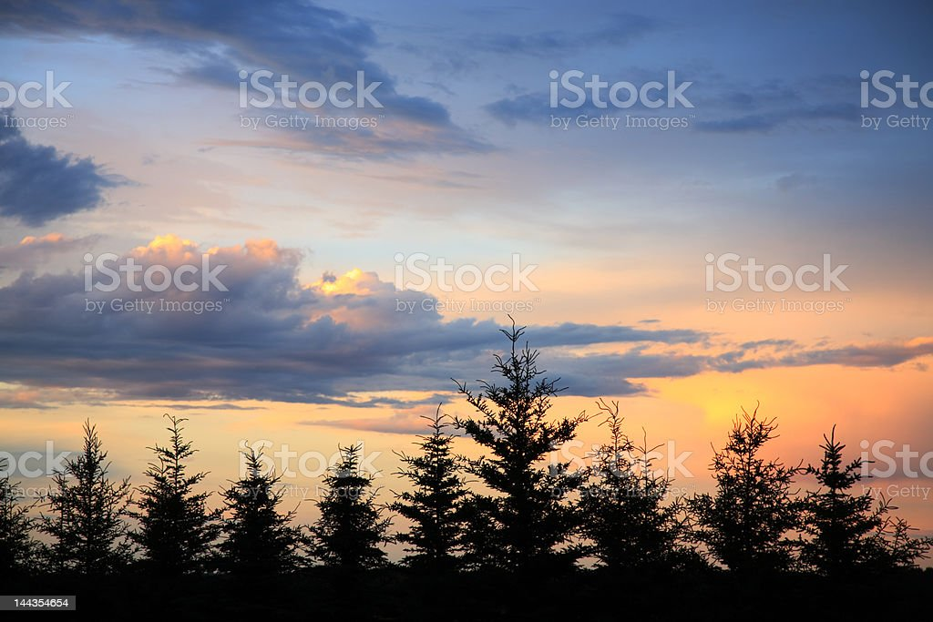Windbreak Sunset royalty-free stock photo