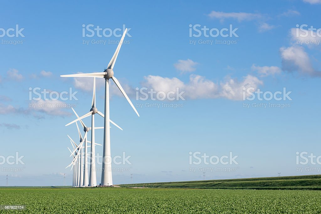 Windfarm in Dutch landscape with field of sugar beets stock photo