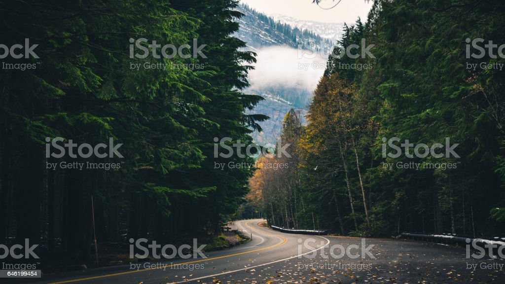 Winding autumn forest road. stock photo
