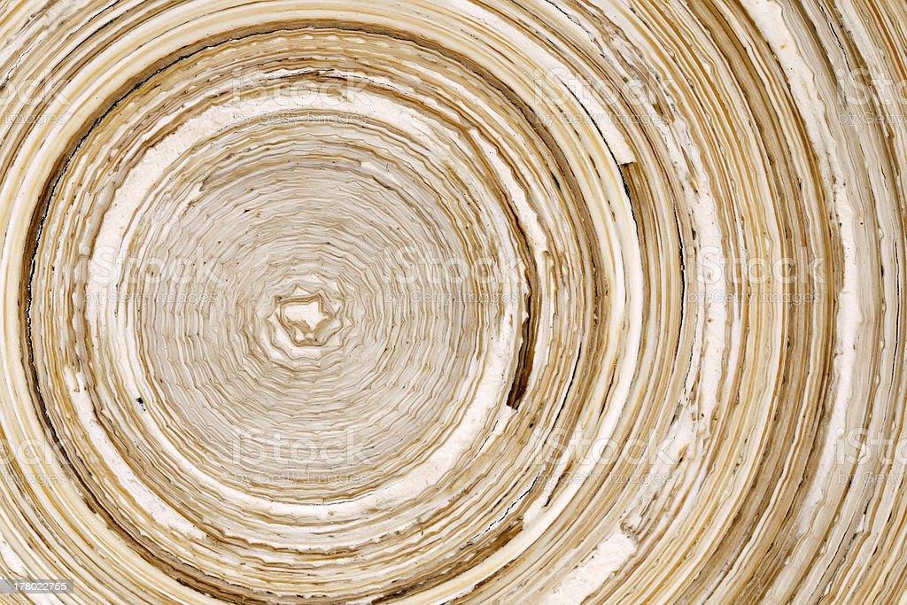 曲がりくねった竹の質感 ロイヤリティフリーストックフォト