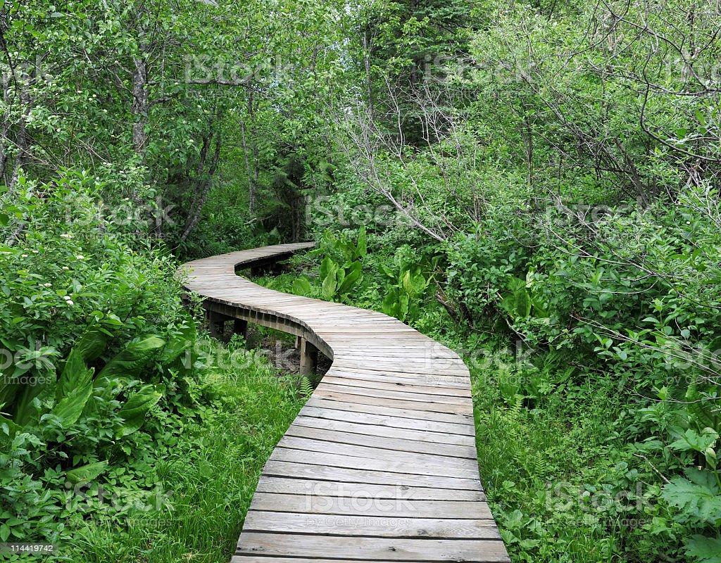 Winding boardwalk, Mount Revelstoke National Park,Canada stock photo
