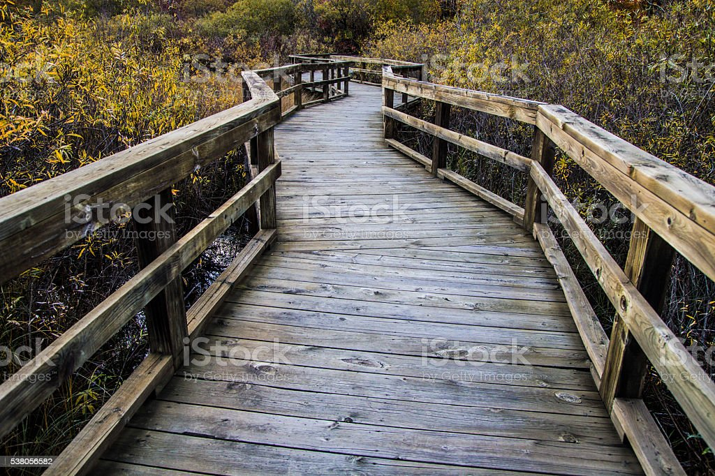 Winding Boardwalk Path Through The Wetlands stock photo