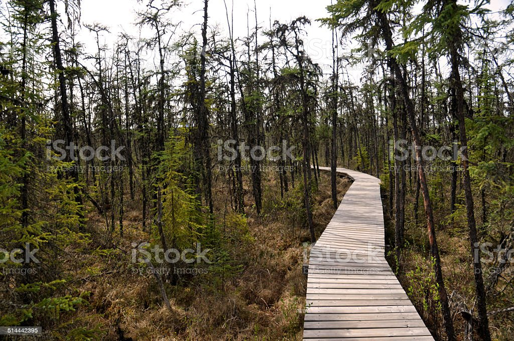 Winding Boardwalk Trail Through A Wetlands Habitat stock photo